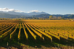New Zealand vineyard Royalty Free Stock Photography