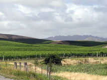 New Zealand Vineyard Royalty Free Stock Photography