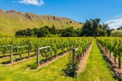 New Zealand Vineyard Stock Photos