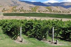 New Zealand Vineyards Stock Photos