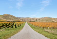 New Zealand vineyards in autumn colours Royalty Free Stock Images