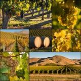New Zealand vineyards at harvest Stock Photo