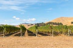 New Zealand vineyards landscape in Marlborough region stock photos