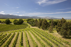 New Zealand - vineyards Royalty Free Stock Photography