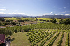New Zealand - vineyards Stock Image