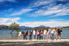 NEW ZEALAND, WANAKA - JANUARY 2016: A group of friends standing in a row in front of the famous Wanaka Tree. Wanaka is a popular stock photos
