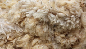 New Zealand Wool. Fresh of a sheep Royalty Free Stock Photos