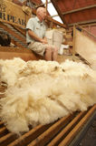 New Zealand wool Royalty Free Stock Photos
