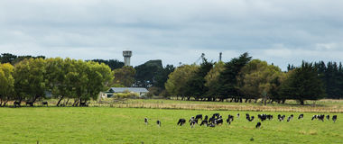 New Zealnd Farmland Stock Image