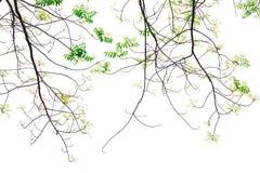 Newbie groen blad op tak royalty-vrije stock foto's