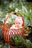 Newborn в корзине Стоковая Фотография