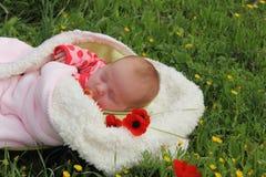 Newborn девушка стоковые фотографии rf