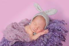 Newborn зайчик младенца Стоковые Фотографии RF