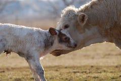 Newborn икра стоковое изображение