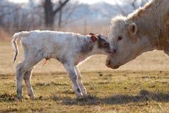 Newborn икра Стоковая Фотография