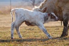 Newborn икра Стоковые Изображения