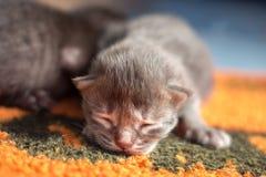 Newborn котенок. Стоковое фото RF