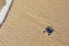 Newborn морская черепаха стоковая фотография