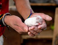 Newborn ребенок кролика в руках Стоковое Фото