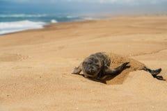 Newborn уплотнение младенца на пляже стоковое изображение rf