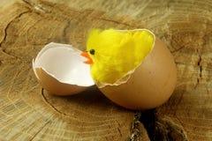 Newborn цыпленок пасхи на стволе дерева Стоковое Изображение RF