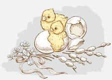 Newborn цыплята в пасхе Стоковые Фото