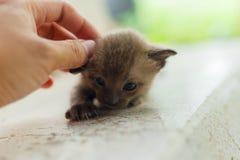 Newborn черный кот Стоковые Изображения RF