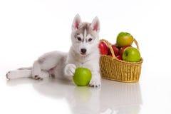 Newborn щенок стоковое изображение