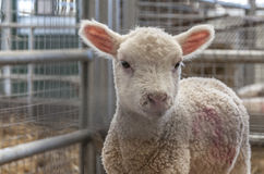 Newborn Стоковые Изображения RF
