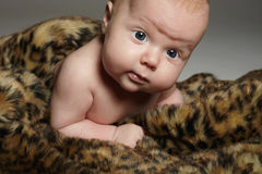 Newborn baby in animal skin.funny little child Royalty Free Stock Photos