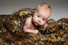Newborn baby in animal skin.funny little child. Crawling newborn baby in animal skin.funny little child Stock Photos