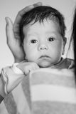 Newborn baby in the arms Stock Image