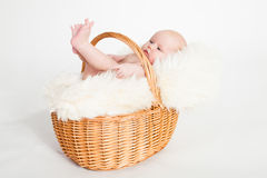 Newborn Baby in a basket. A beautiful baby girl with cute facial expression lying in a basket - two months old Royalty Free Stock Photography