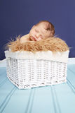 Newborn Baby in Basket Royalty Free Stock Photo