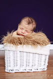 Newborn Baby in Basket Royalty Free Stock Image