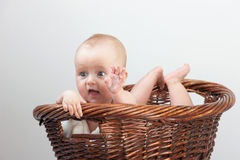 Newborn baby in basket. Adorable laughing baby in a basket. Isolated On Gray Background Stock Photography
