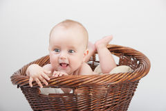 Newborn baby in basket. Adorable laughing baby in a basket. Isolated On Gray Background Royalty Free Stock Photos