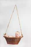 Newborn baby in basket. Adorable laughing baby in a basket. Isolated On Gray Background Royalty Free Stock Photography