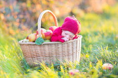 Newborn baby in basket with apples in sunny garden Royalty Free Stock Images