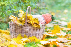 Newborn baby in basket full with yellow maple leaves Royalty Free Stock Photo