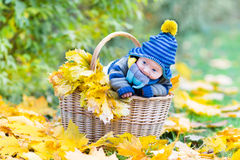 Newborn baby in basket between yellow maple leaves Royalty Free Stock Photo