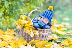 Newborn baby in basket between yellow maple leaves. Adorable little newborn baby in a basket between yellow maple leaves Royalty Free Stock Photo