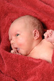 Newborn baby after bath Stock Image