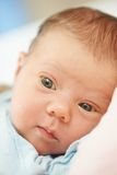 Newborn baby in bedsheet Stock Photography