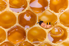 Newborn baby bee in honeycomb Stock Photos