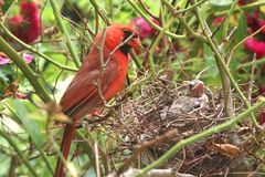 Newborn Baby Bird in a Nest. Stock Images