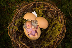 Newborn baby in bird's nest Stock Images