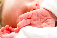 Newborn Baby Boy Hands Stock Image