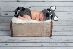Newborn Baby Boy in a Raccoon Costume Stock Image