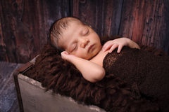 Newborn Baby Boy Sleeping in a Rustic Crate Stock Photography